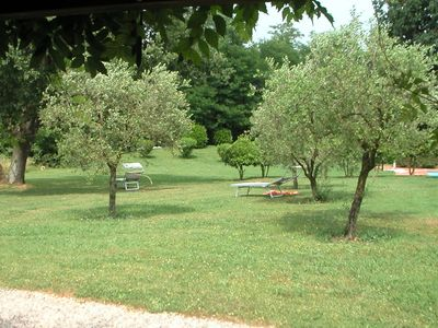 olivenbaume
